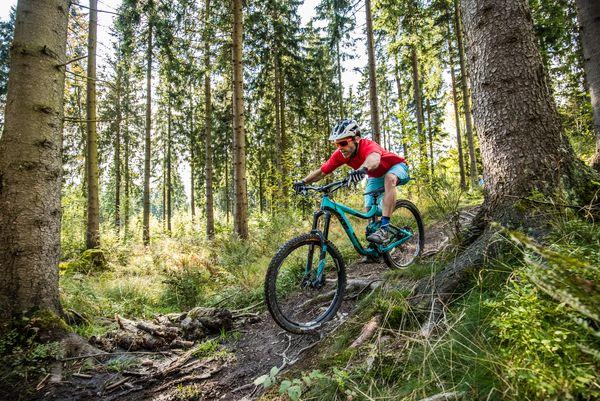 Ein Biker fährt einen Trail mit Wurzeln hinab, umringt von Bäumen im Sonnenlicht