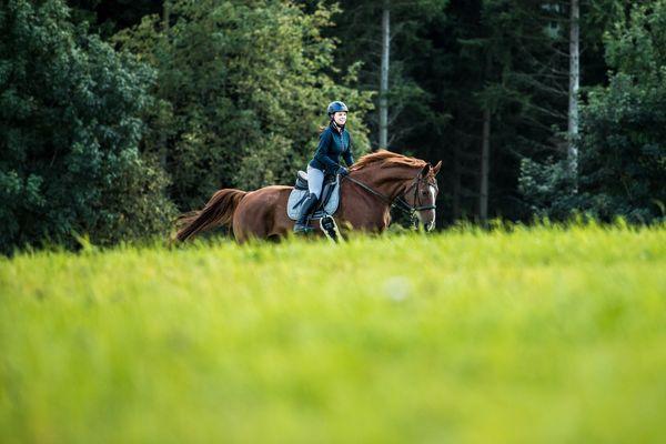 Reiter galoppiert mit seinem fuchsfarbenen Pferd über eine saftgrüne Wiese