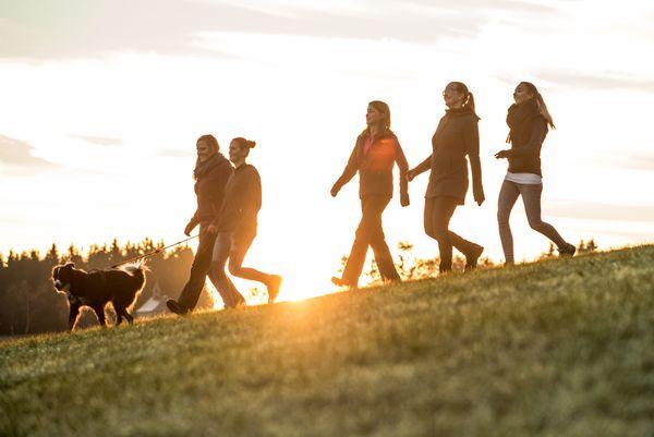 Fünf Wanderer gehen mit einem Hund beim Sonnenaufgang spazieren